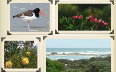 Southern Tip of Africa Birding