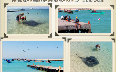 Struis Bay Harbour and Stingray